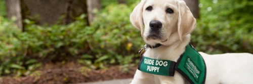 guide-dogs-for-the-blind-photo-contest-hero
